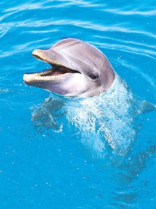 Wild Earth Dolphin