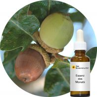 Garry Oak (Pacific Essences)