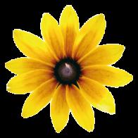 Blütenessenzen – sanfte Helfer im Alltag