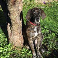 Mein Hund Suzie und die Animal Care Mischung