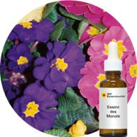 Polyanthus (Pacific Essences)