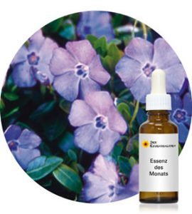 Periwinkle (Pacific Essences)