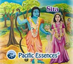 Pacific Essences: Sita