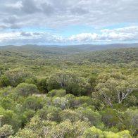 Eine Botschaft von den Australischen Buschblüten