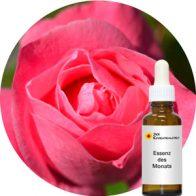 Pink Rose (Crystal Herbs)