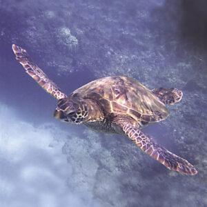 35 Jahre Pacific Essences Meeresessenzen