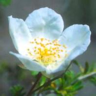 Unterstützende Blütenessenzen aus der Sommerhitze von Arizona