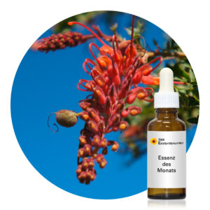 Fuchsia Grevillea (Living Essences of Australia)