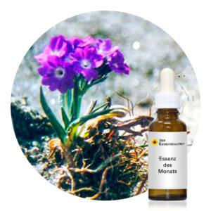 Nirjara 2 (Himalayan Flower Enhancers)