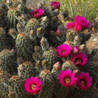Der Zustand der Wüste im Frühling