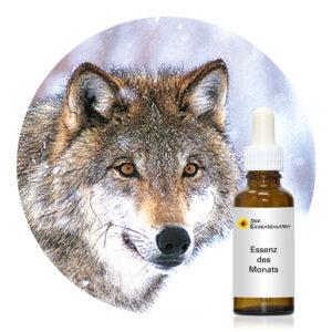 Wolf (Wild Earth Tieressenzen)
