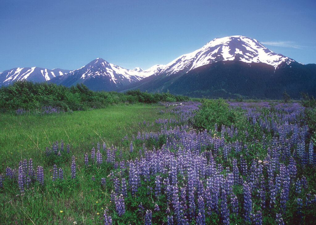 Alaskan Essences